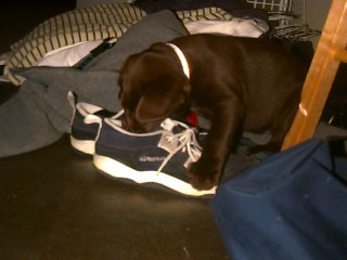 [16-puppy-shoes.jpg]