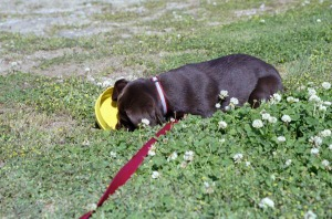 [13-puppy-clovers.jpg]